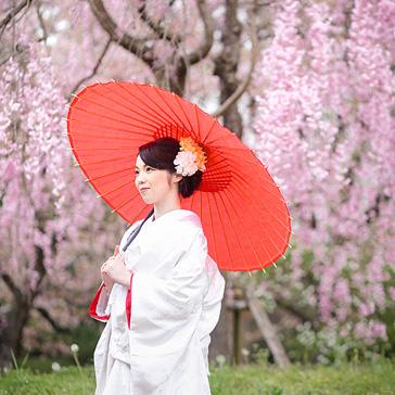 桜フォトギャラリー前撮り06