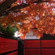 車折神社の前撮り