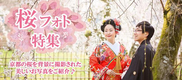 桜フォト特集