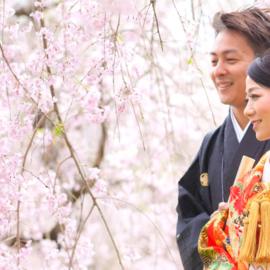 桜早割りキャンペーン2019